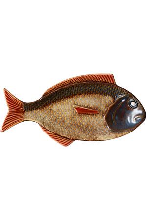 【ASIATIDES】TROPICAL FISH アメリカンラグ シー/AMERICAN RAG CIE
